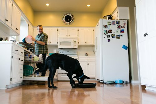 dad cleaning dishes dog licking pan after famiy dinner real life authentic moment photo